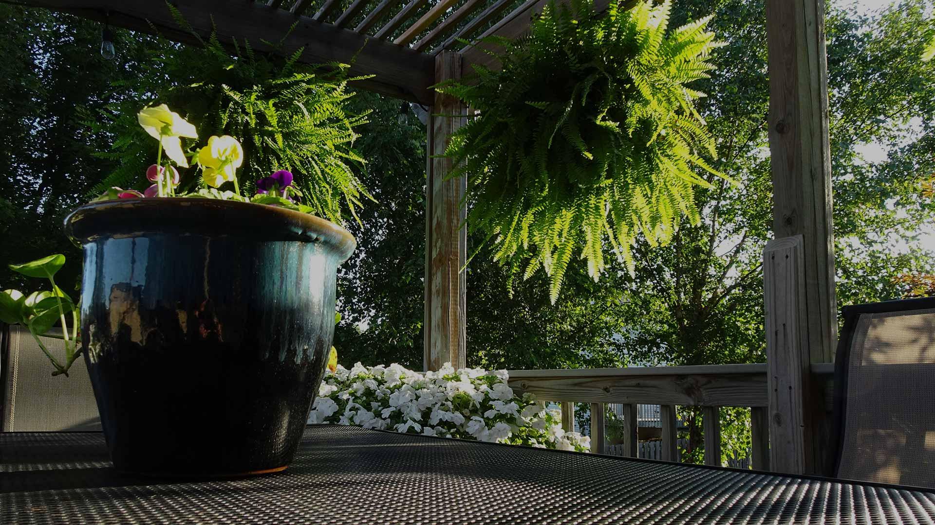 Nice deck plants
